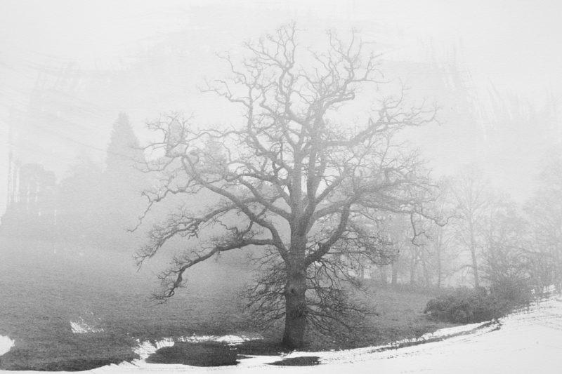 untitled-oak.jpg